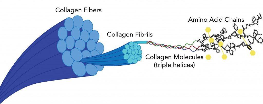 Collagen Illustration